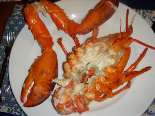 lobster | Refined Palate