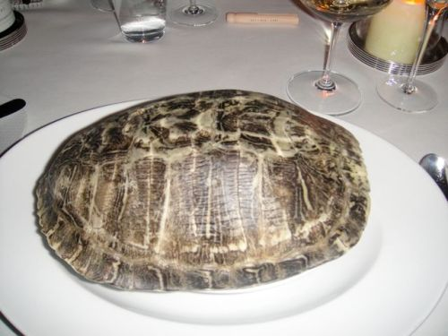 turtle shell 1