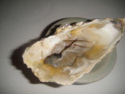 Grano oyster