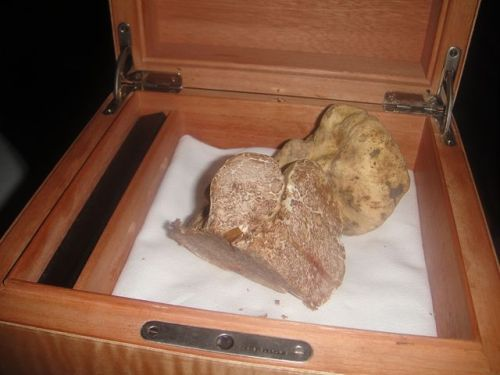 Fr - white truffles