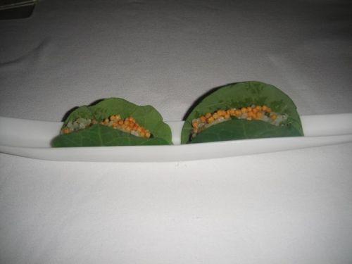 P taco
